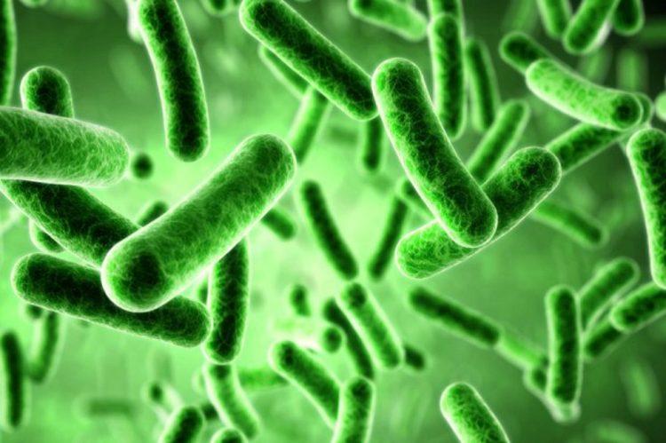 bacterias-computadoras-e1501261520491.jpg